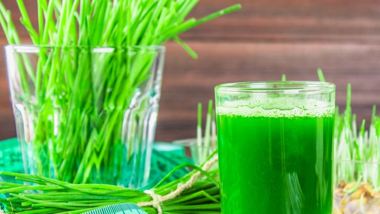 26543941-wheatgrass-shot-juice-from-wheat-grass-trend-of-health