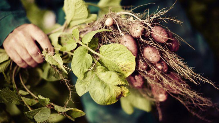 Orkla visar stark utveckling för växtbaserat