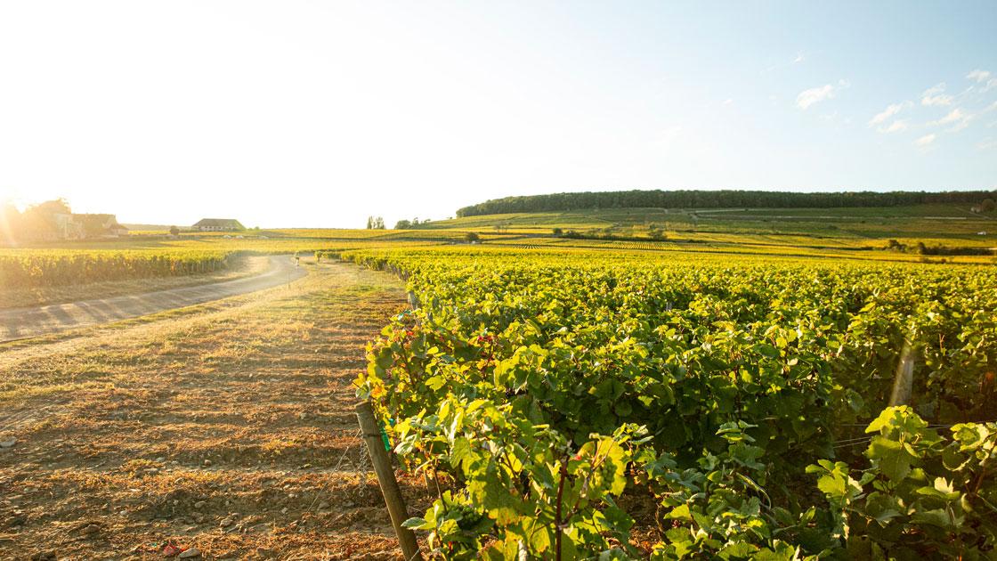NYHET i fast sortiment 1 september - Röd drickmogen Bourgogne från toppårgången 2015