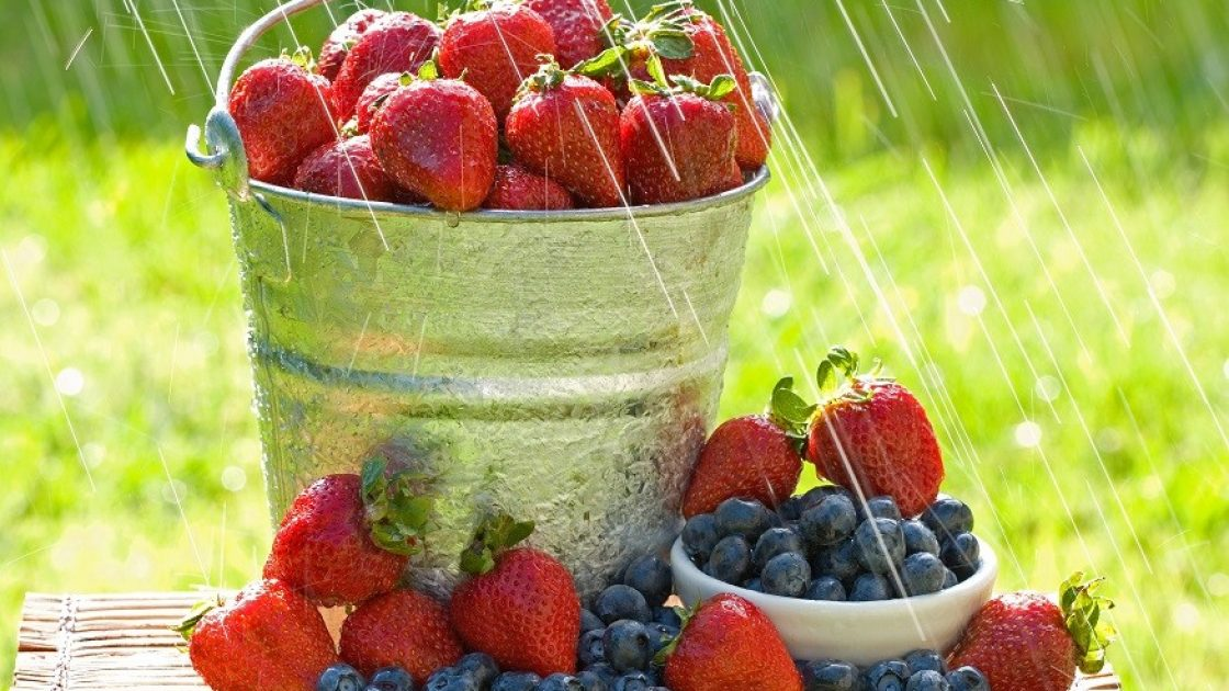 A bucket of fresh strawberries and blueberries in the morning rain get wet with dew