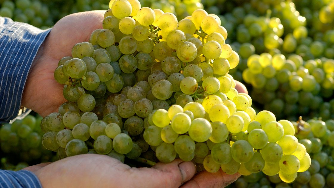2020 – en utmärkt årgång för tyska viner